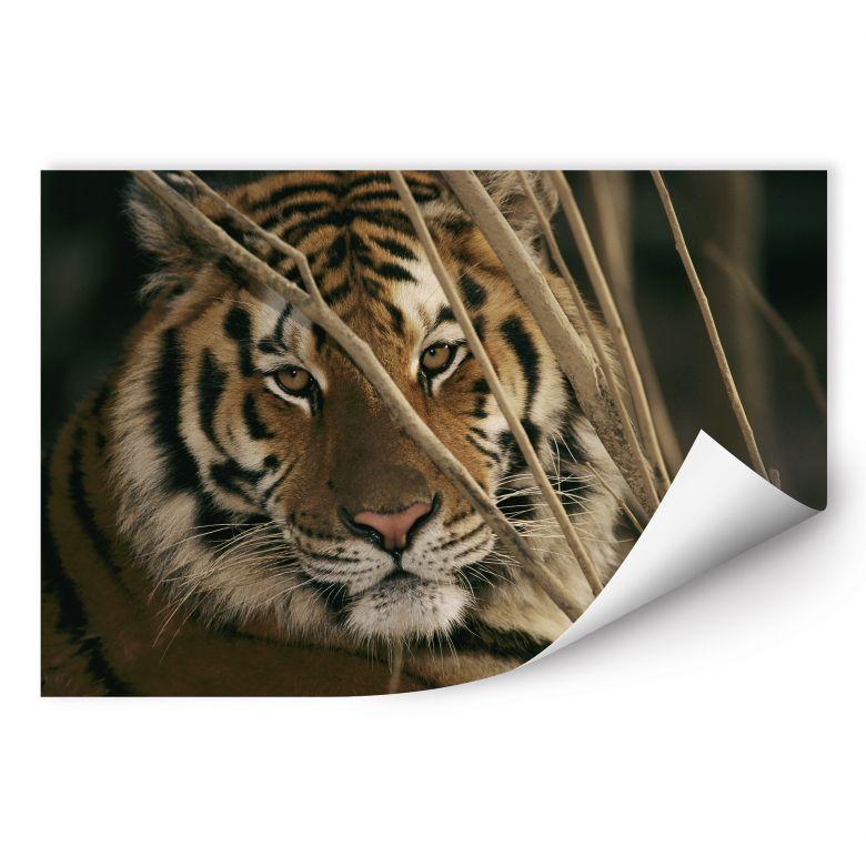 Wallprint W - NG Tiger
