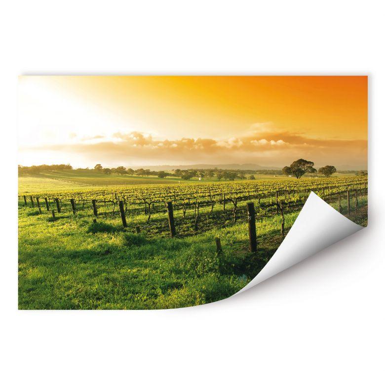 Wallprint W - Wein im Sonnenuntergang