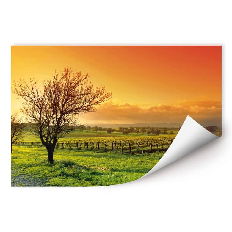 Wallprint W - Weinlandschaft