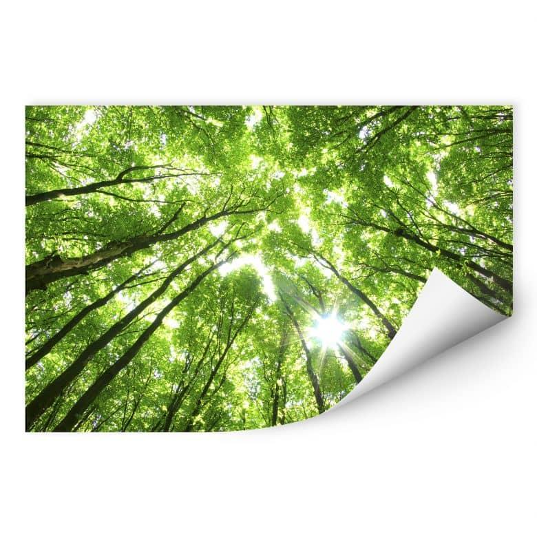 Wallprint Baumkronen im Wald