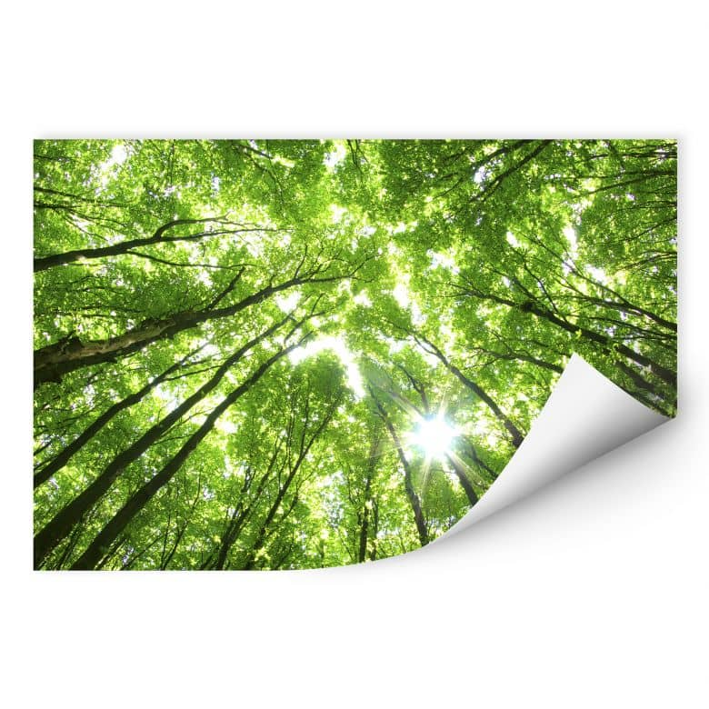 Zelfklevende Poster  Bomen in het Bos