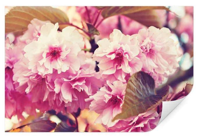 Wallprint W - Vintage Kirschblüten