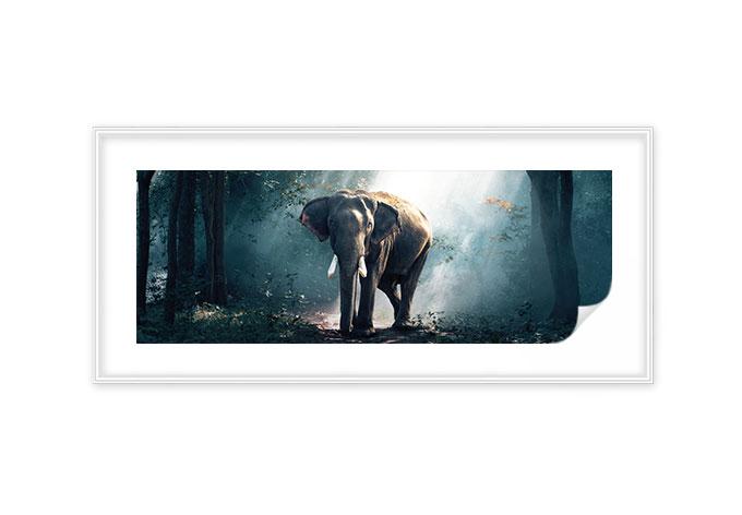 Wallprint + Zierleisten Waldelefant - Panorama