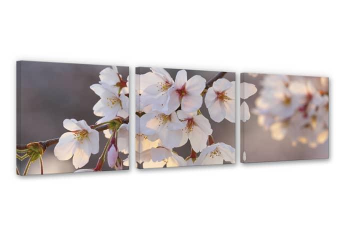Leinwanddruck kirschbl tenzweig 3er set wandbilder wall - Leinwandbilder schlafzimmer ...