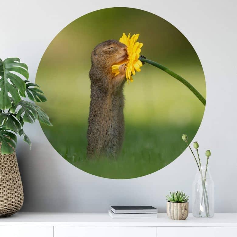 Wall sticker Dick van Duijn - Squirrel smelling flower - round