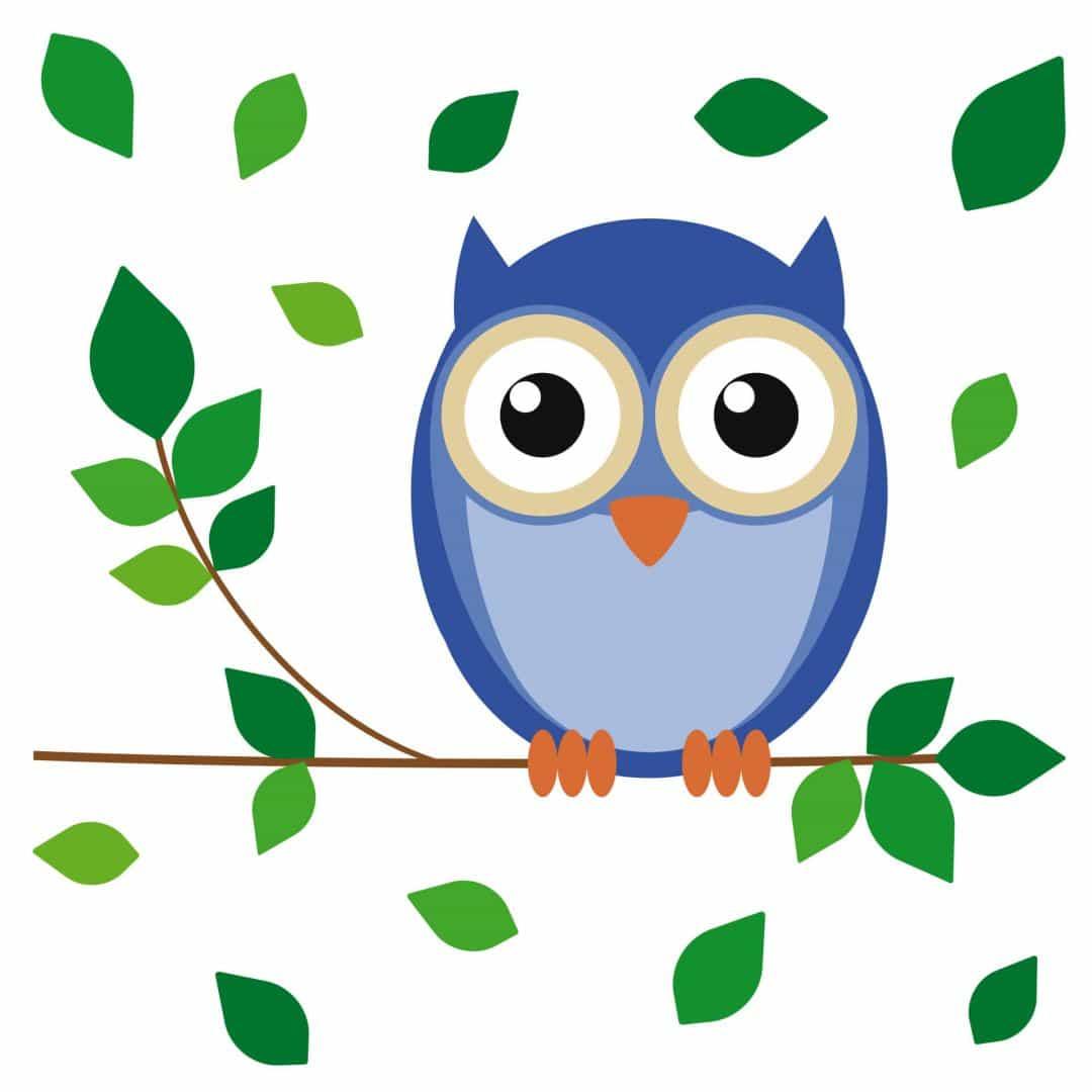 einstein owl wall sticker  wallart