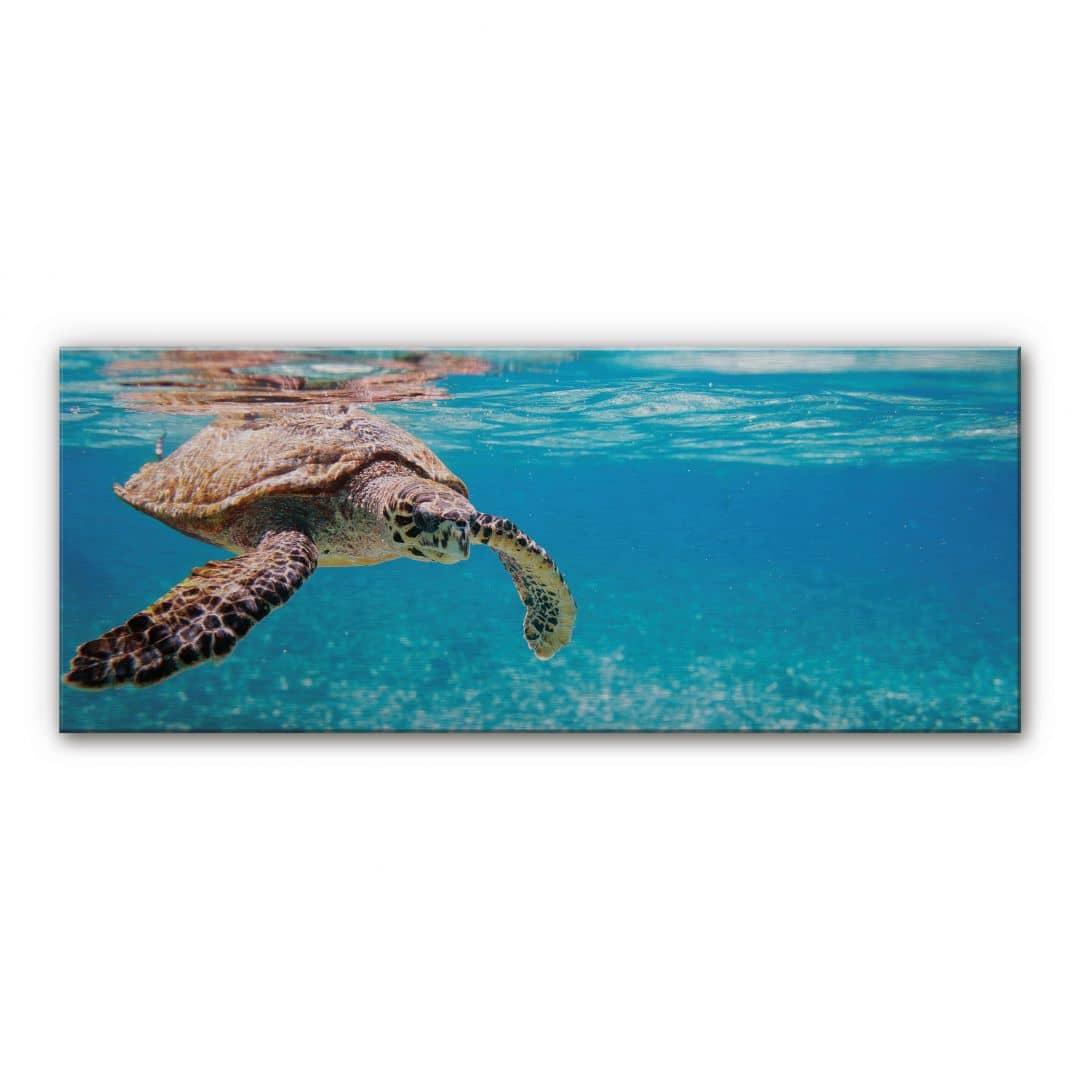 spatscherm alu dibond traveling turtle panorama. Black Bedroom Furniture Sets. Home Design Ideas