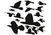 Wandtattoo Zugvögel