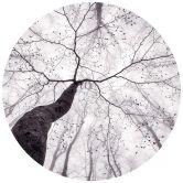 Fototapete Pavlasek - Ein Blick in die Baumkronen - Rund