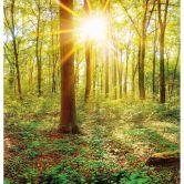 Fototapete - Tief im Wald
