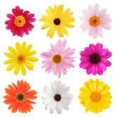 Wandtattoo Blüten-Set