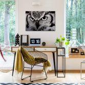 Proud Owl Aluminium print