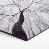 Hexagon - Alu-Dibond Pavlasek - Ein Blick in die Baumkronen