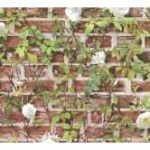 Carta da parati Authentic Walls 2- Pianta rampicante