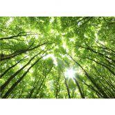 Fototapete Baumkronen im Wald