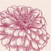 Flower Illustration - Photo Wallpaper