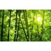 Fotobehang Zonneschijn in het Bamboebos