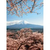 Fototapete Colombo - Mount Fuji in Japan