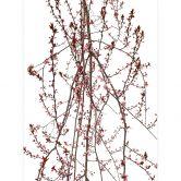 Fototapete Kadam - Flora Mandelbaum - 192x260 cm