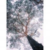Fototapete - Krivec - Baum im Winter