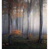 Fototapete - Morgennebel im Wald
