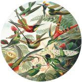 Fototapete Haeckel - Kolibris - Rund