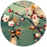 Papier peint photo Eveil du printemps - Rond