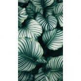 Fototapete Urban Jungle - Calathea Orbifolia 144x260cm