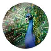Glasbild Beautiful Peacock - rund