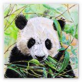 Wandbild Toetzke - Pandabär - quadratisch