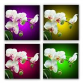 Wandbild Blütenpracht einer Orchidee - quadratisch