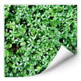 Klebefolie Der grüne Daumen