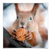 Kleeffolie Eekhoorntje voor IKEA Lack