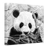 Canvas Toetzke - Pandabeer (vierkant)