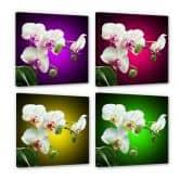 Leinwandbild Blütenpracht einer Orchidee - quadratisch