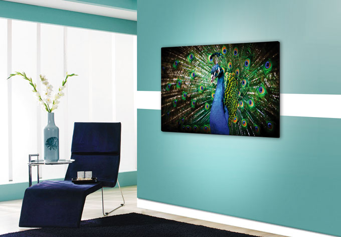 glasbild beautiful peacock wandbild mit pfau wall. Black Bedroom Furniture Sets. Home Design Ideas