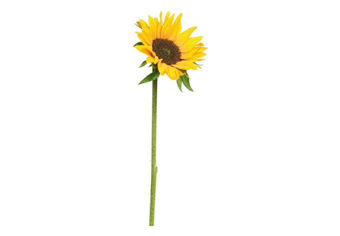 Single Sunflower Border Wall stickers sunflower single
