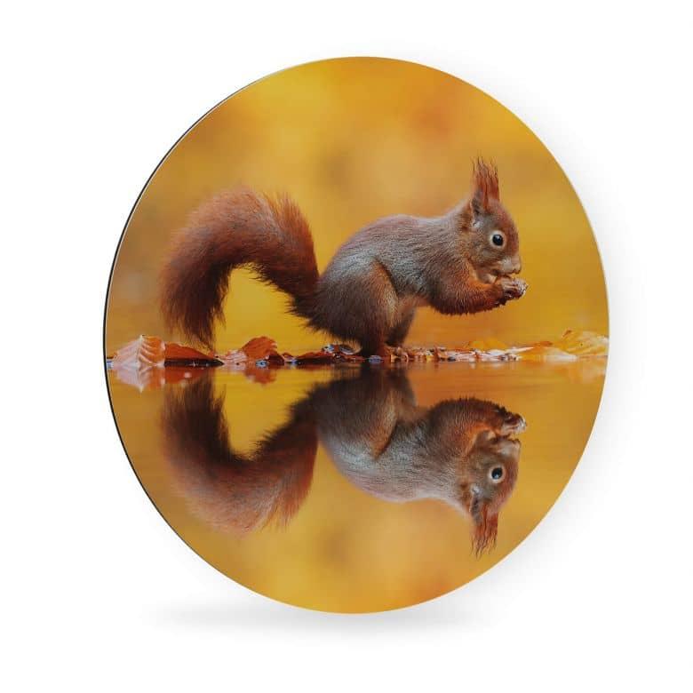 aludibond van duijn  eichhörnchen mit nuss  rund  wall