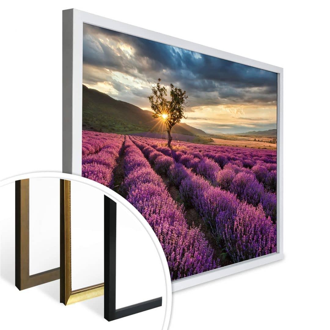 poster fleurs de lavande en wall. Black Bedroom Furniture Sets. Home Design Ideas