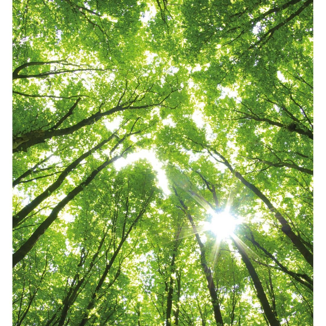 fototapete sunny forest 2 m rchenhaftes idyll wall. Black Bedroom Furniture Sets. Home Design Ideas
