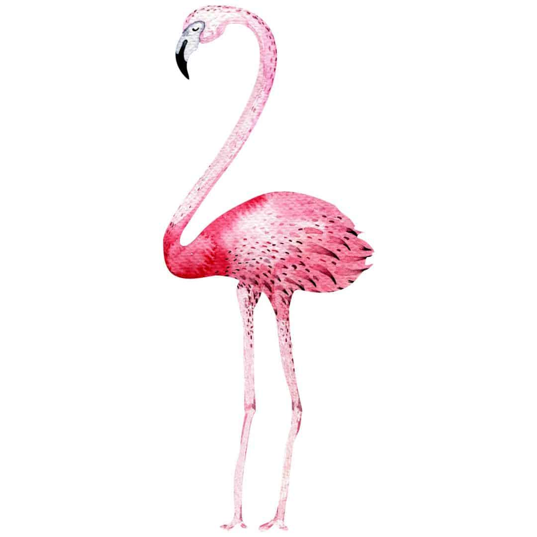 Kristina kvilis flamingo 02 wall - Flamingo wandtattoo ...