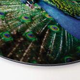 Alu-Dibond - Beautiful Peacock - Rund