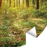 Fototapete Tief im Wald - Rund
