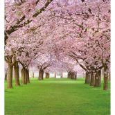 Spring - Photo Wallpaper