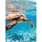 Traveling Turtle - Photo Wallpaper