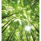 Sunny Forest 2 - Photo Wallpaper