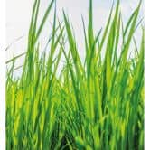 Fototapete Grünes Gras