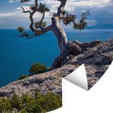 Fototapete Sea and Tree - Rund