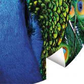 Fototapete Beautiful Peacock - Rund
