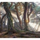 Fototapete Ryu - Heiliger Kiefernwald